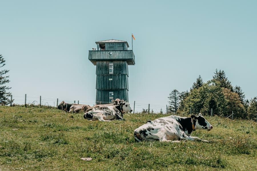 Wanderung Hauchenberg mit Alpkoenigblick im Allgaeu – Aussichtsturm mit Kuehen