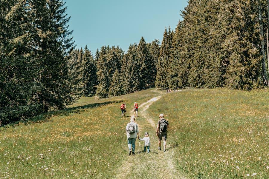 Wanderung Hauchenberg mit Alpkoenigblick im Allgaeu – Lichtung