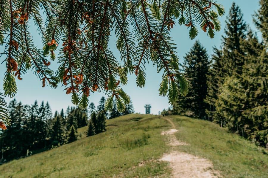 Wanderung Hauchenberg mit Alpkoenigblick im Allgaeu – Wald mit Aussichtsturm