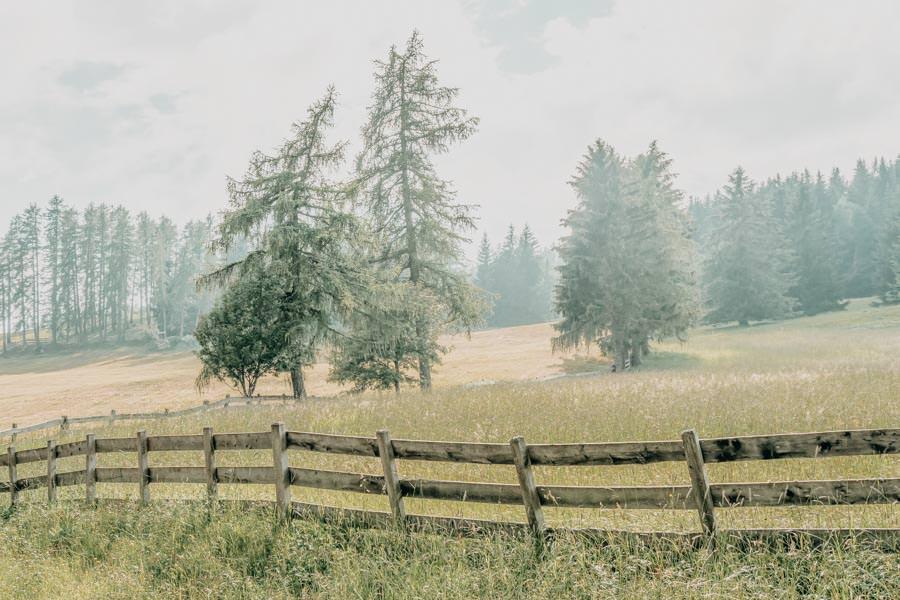 Wanderung Leadner Alm Suedtirol – Baeume