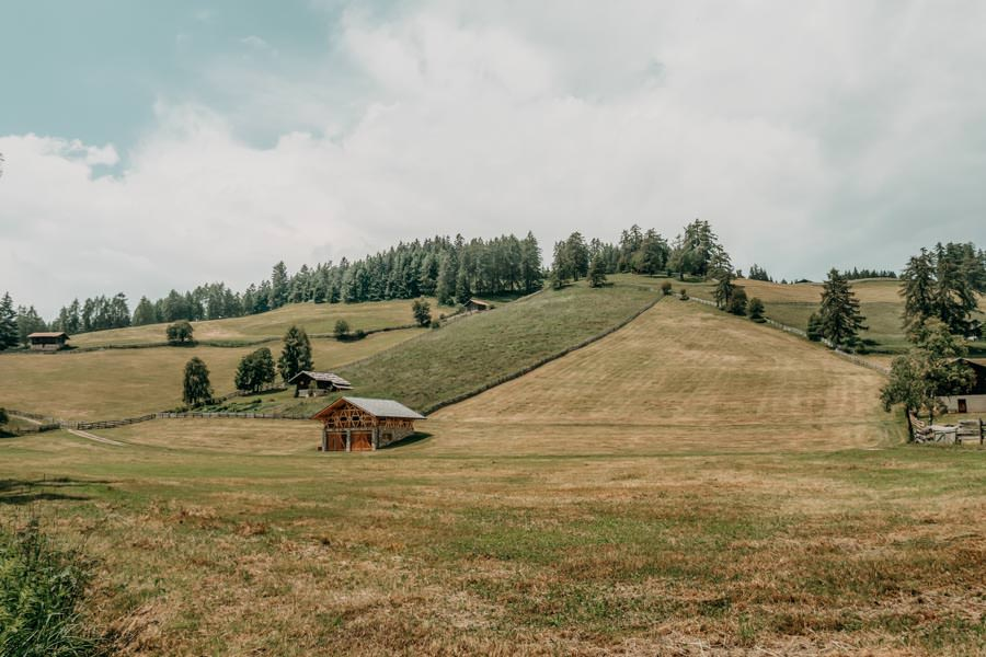 Wanderung Leadner Alm Suedtirol – Wiese