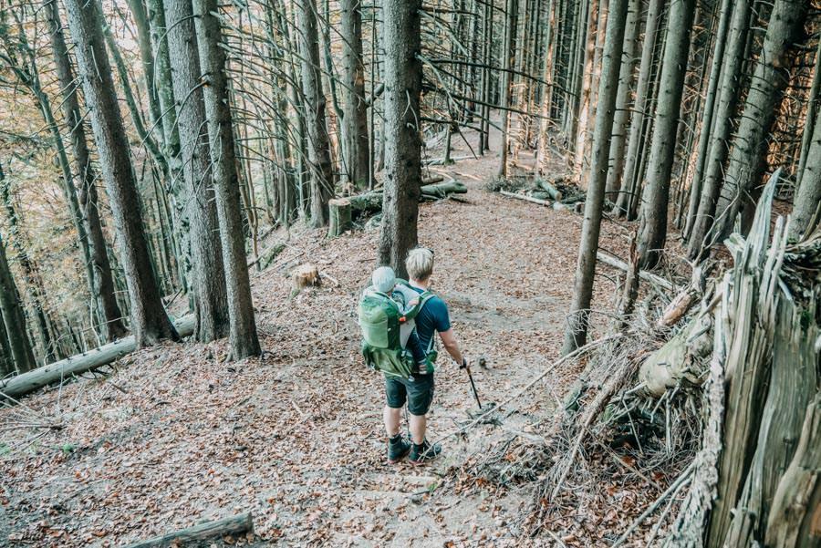 Wanderung Sennalpe Derb bei und Oberberg im Allgaeu – Abstieg Wald