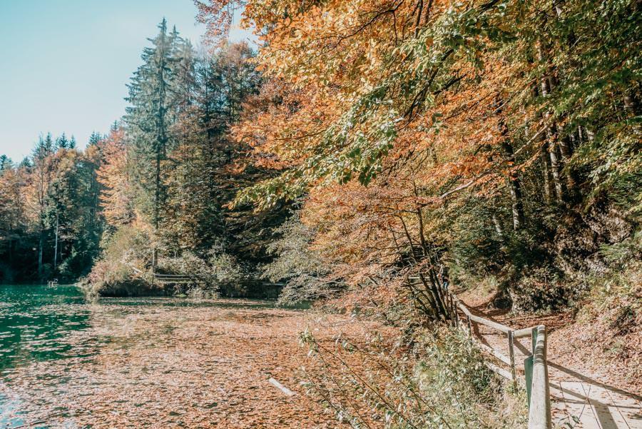 Wanderung Sennalpe Derb bei und Oberberg im Allgaeu – Herbstfarben am See