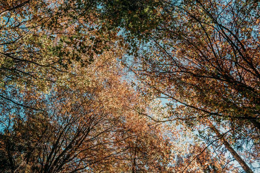 Wanderung Sennalpe Derb bei und Oberberg im Allgaeu – Herbstfarben