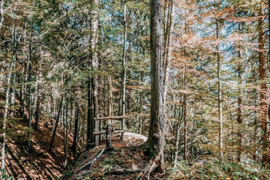 Wanderung Sennalpe Derb bei und Oberberg im Allgaeu – Wald