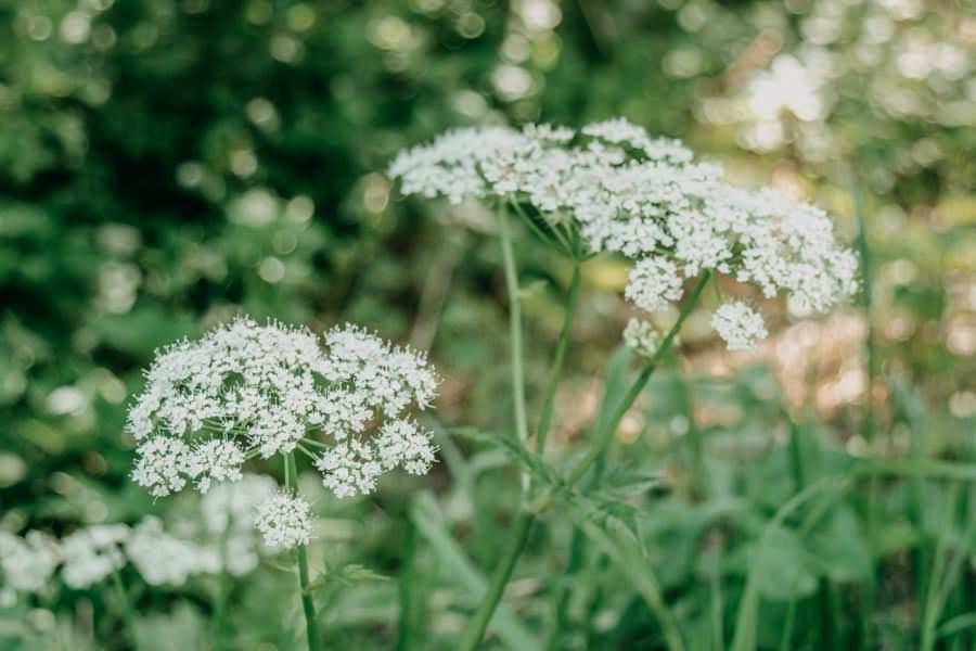 Wanderung beim Glasmacherdorf Schmidsfelden im Allgaeu – Blumen