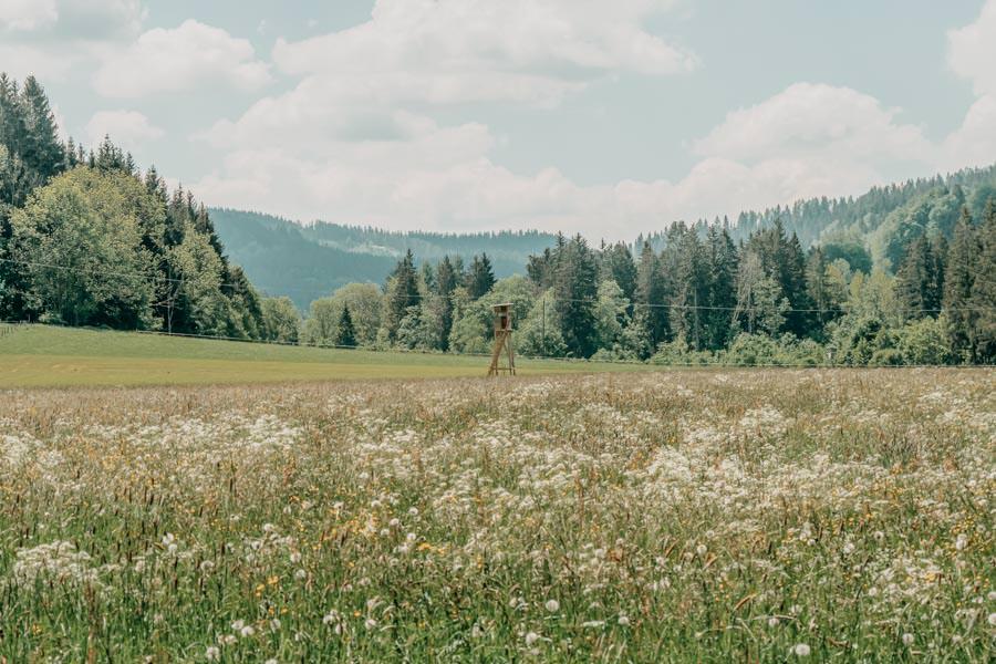 Wanderung beim Glasmacherdorf Schmidsfelden im Allgaeu – Wiese mit Jaegerstand