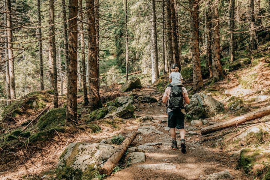 Wanderung zur Ifinger Huette in Suedtirol – Im Wald wandern