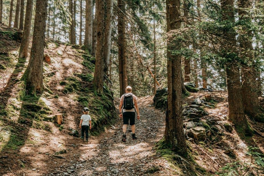 Wanderung zur Ifinger Huette in Suedtirol – Wandern im Wald