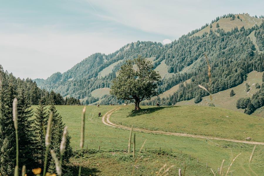 Lecknertal Wandern - Lecknertal Wanderung - Bregenzer Wald 10