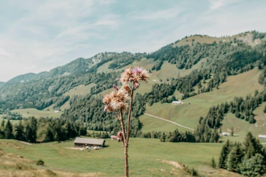 Lecknertal Wandern - Lecknertal Wanderung - Bregenzer Wald 20