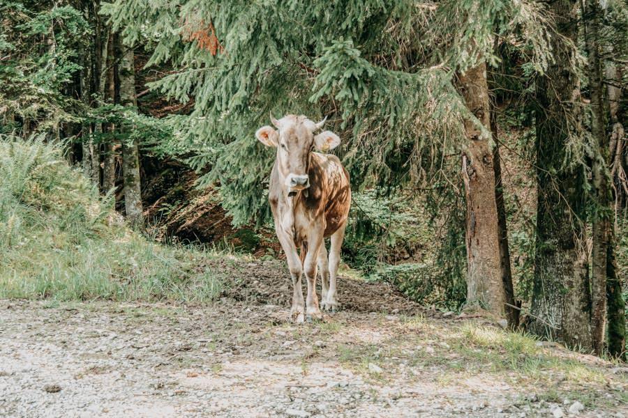 Lecknertal Wandern - Lecknertal Wanderung - Bregenzer Wald 21