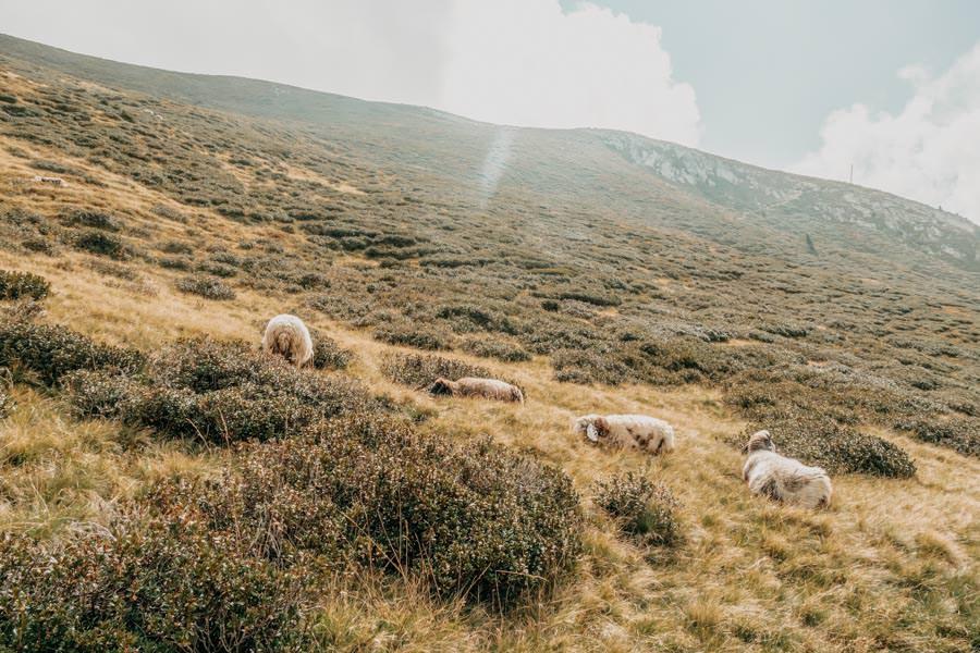 Wandern von Huette zu Huette am Hirzer in Suedtirol 4