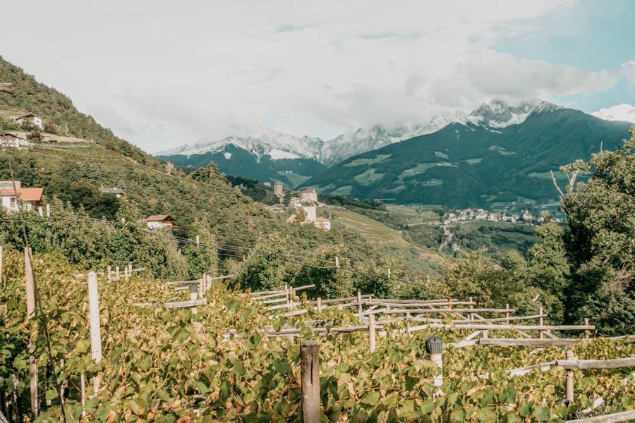 Dorf Tirol Wanderung mit Schlenker ueber den Algunder Waalweg in Suedtirol 21