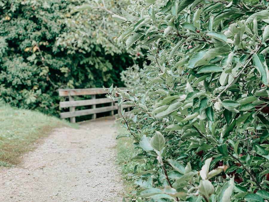 Schenna Wandern – Mitterplattweg - Maiser Waalweg 2