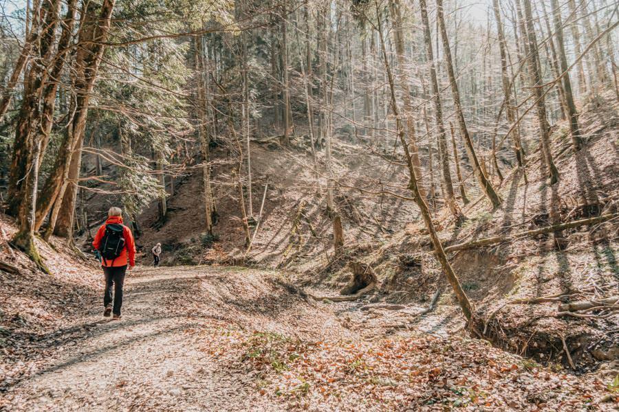 Isny Wandern – Rohrdorder Tobel Allgaeu 11