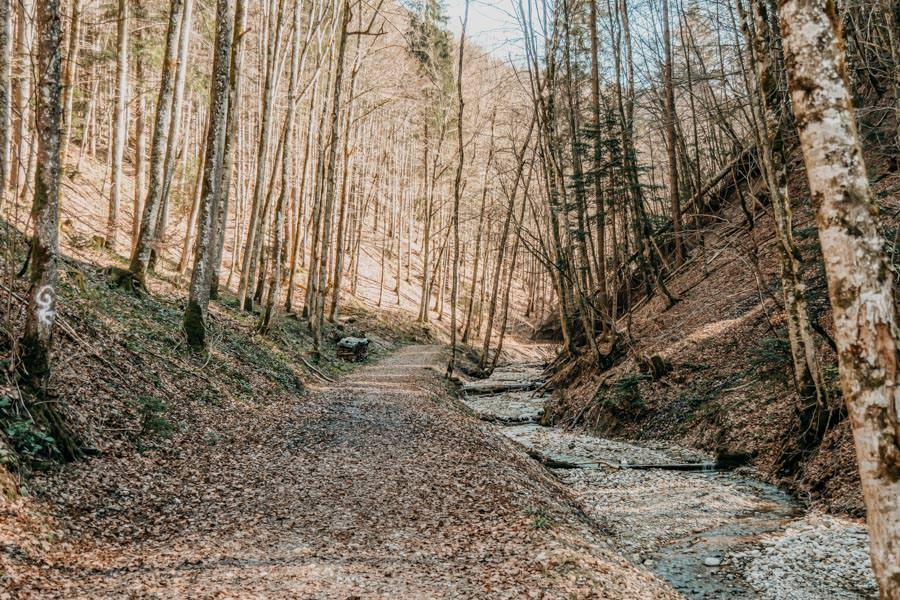 Isny Wandern – Rohrdorder Tobel Allgaeu 4