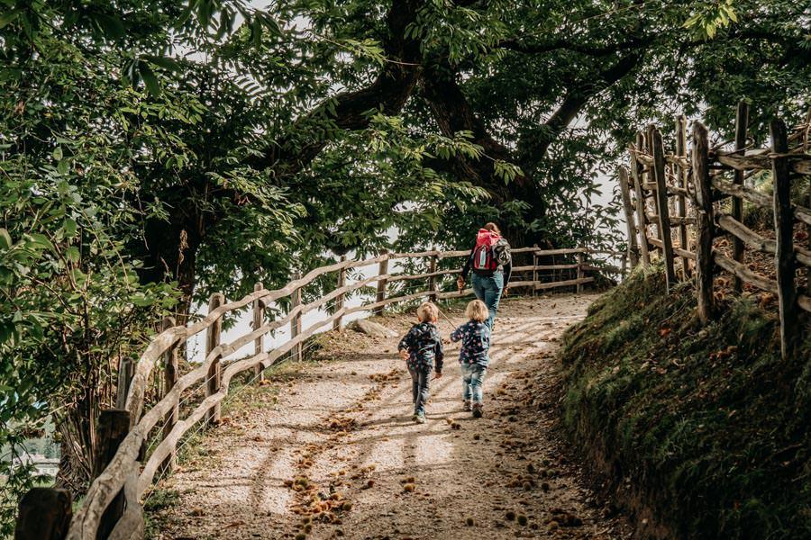 Wanderung Kastanienweg Voellan Suedtirol - 14